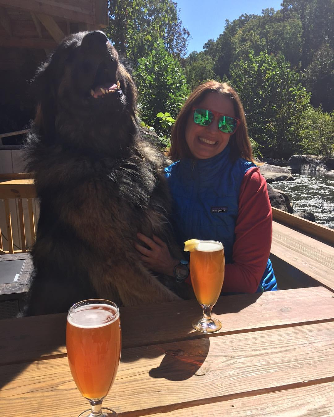 A dogs life in asheville mountain merch img4065 145707958539007980802135460259839508509539o fullsizerender solutioingenieria Choice Image